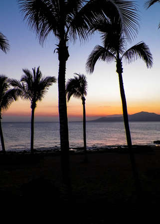Palm trees an sunset in Puerto del Carmen, Lanzarote, Canary Islands. Travel and nature concept. 版權商用圖片