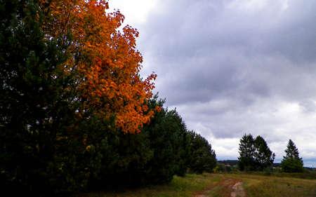 First days of autumn - orange color tree. Kashubian Region, Poland. Nature concept. 版權商用圖片 - 153404918