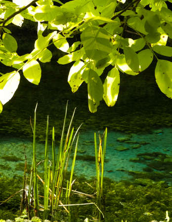 Beautiful, transparent water of Black Drim's River, Macedonia. Balcan nature. 版權商用圖片 - 153404975