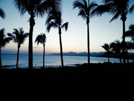 Palm trees an sunset in Puerto del Carmen, Lanzarote, Canary Islands. Travel and nature concept. 版權商用圖片 - 153404996