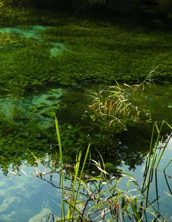 Beautiful, transparent water of Black Drim's River, Macedonia. Balcan nature.