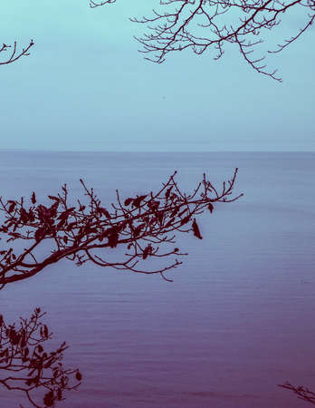 Abstract photo of autumn branch and Baltic sea as nature background. Abstract filter toned, copy space. 版權商用圖片