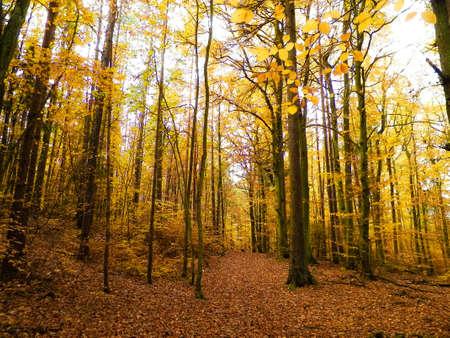 Polish forest in autumn. Nature concept. 版權商用圖片