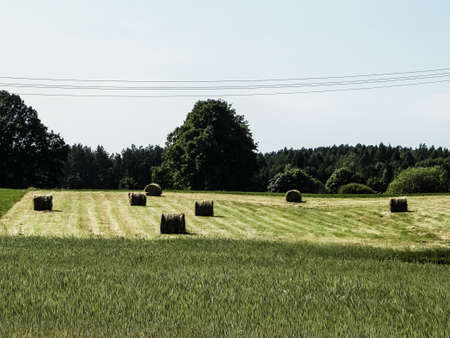 Sheaves of hay on meadow on Kashubian village. Nature and agriculture concept. Stok Fotoğraf