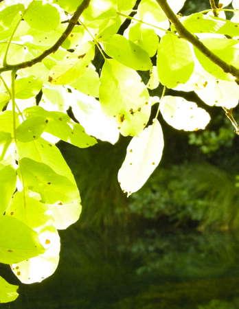 Close up of green leaves. Balkan nature.