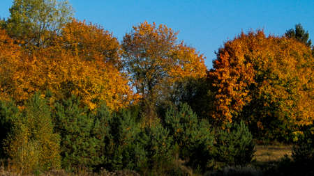 Autumnal forest in sunny day, Poland. Nature and travel concept. 版權商用圖片