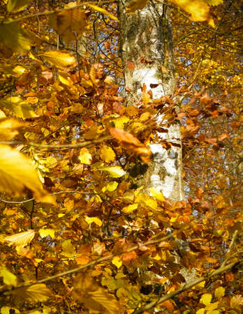 Autumnal leaves as nature background. Gold autumnal colors, nature concept.