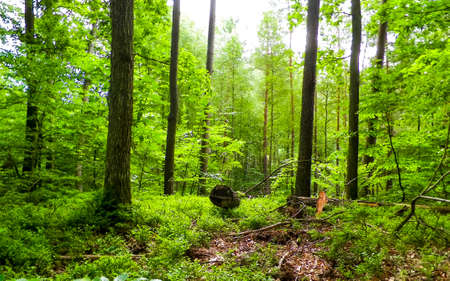 Landscape of forest area in Pelcznica National Reserve. Beautiful nature of northern Poland, Kashubian region.