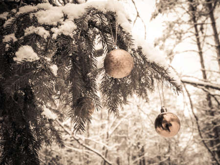 Christmass ball on tree twig in forest, winter season, Christmas time. Copy space. 版權商用圖片