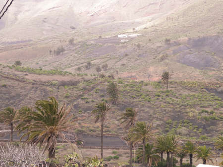 Exotic nature of the northern part of the Lanzarotte island. Hills and palms, nature and travel concept.