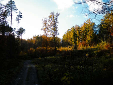 Autumnal forest. Copy space on sky. Fall season nature and weather concept.