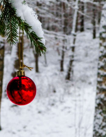 Close up of red Christmas balls in winter forest. Christmas card, copy space. 版權商用圖片