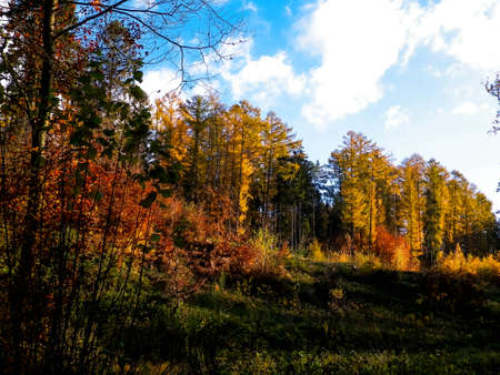 Autumnal forest in sunny day. Blue sky with clouds. Seasonal weather and nature concept. 版權商用圖片