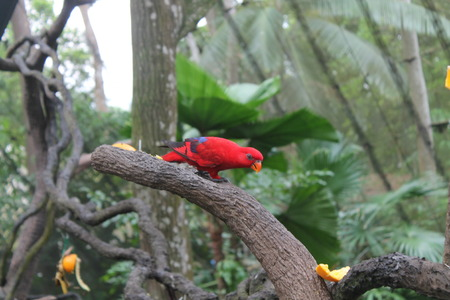 Parrot - Red Blue Macaw Stock Photo