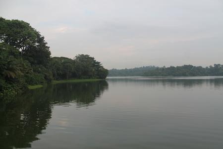 野生動物の美しさ、シンガポール動物園の緑の自然の湖