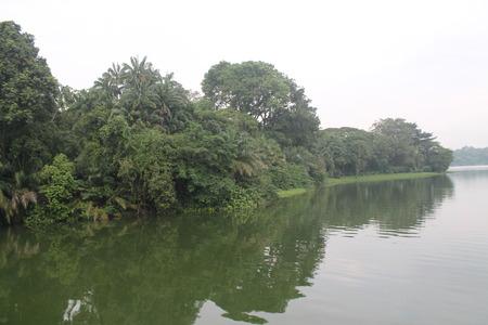 シンガポール動物園緑自然の湖、野生動物の美しさ