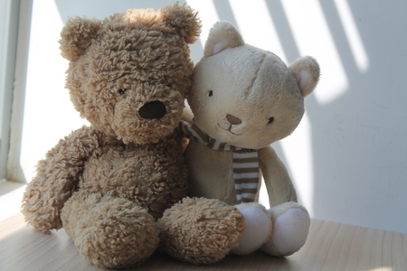 Brown Bear and kitten toy sitting by the window in shadows