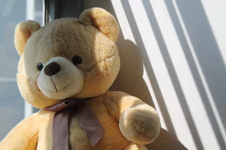 Bear toy sitting by the window in shadows