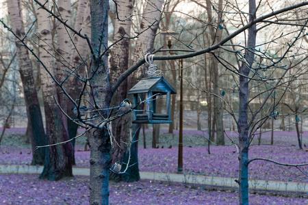 Feeders for bird . tree house for the birds, cheerful apartment Reklamní fotografie