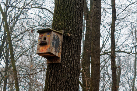 Feeders for bird . tree house for the birds, cheerful apartment Reklamní fotografie