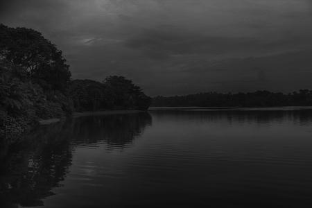 野生動物の美しさ、シンガポールの湖、モノクロの背景 写真素材