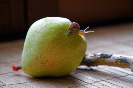 Snail sitting on green pear and tree trunk and crawls to broccoli, wooden bamboo backdrop, close-up animal background.