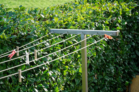 Clothesline with clothespins in garden in sunny day, fresh clean background. Stock Photo