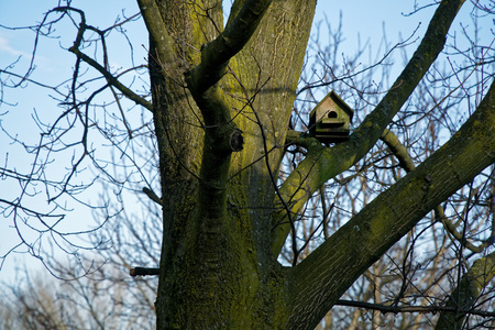 Wooden Feeders for bird . tree house for the birds, cheerful apartment.