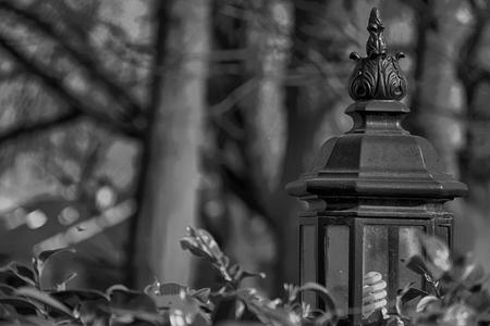 Garden light on green grass wall, antique ornamental lantern.