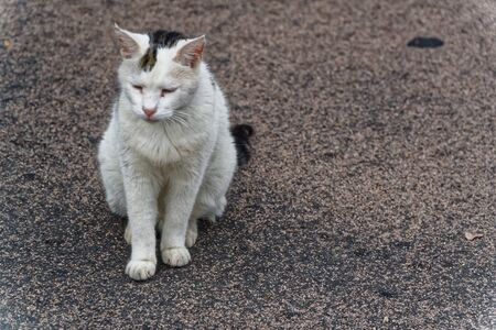 Cat stray and dirty on the street. 写真素材
