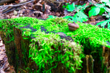 Moss on tree roots, branch and log in a green forest or moss on tree trunk. Tree bark with green moss. Selective focus