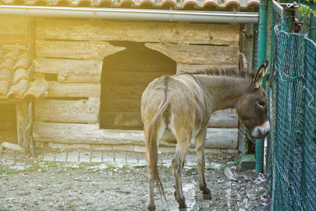 Donkey behind the net, domestic animal.