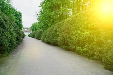 Garden stone asphalt path with grass growing up between the stones.Detail of a botanical garden Imagens