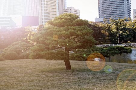 Downtown centre in Tokyo city. View from public park. Tokyo's Skyline. 免版税图像