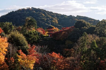 Japan autumn landscape. Colorful leaves and stream in Japan. 免版税图像