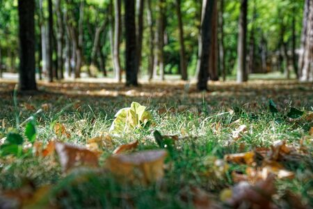 Autumn leaves in park, shot from ground angle.