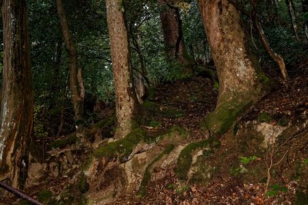 Old Tree roots in park Sybmol of source.
