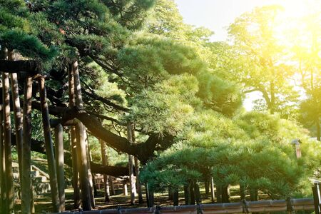 Public Park in Tokyo trees with green crown. Shadows and silence. 免版税图像