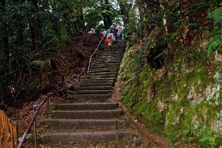Japan zen path in a garden, park in autumn season and maple tree.
