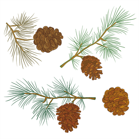 Merry Christmas and happy New Year background. Vector image of coniferous branches with cones on a white background. Fir-trees, pines, fir.