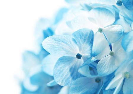 airiness: Hydrangea Flowers