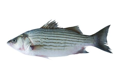 fish tail: Sea bass isolated on white