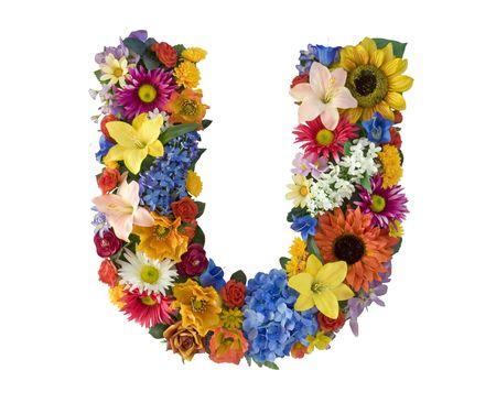 Flower Alphabet  - U photo