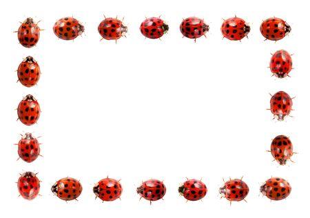 Ladybug frame Stock Photo