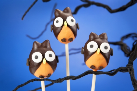 Owl cake pops photo
