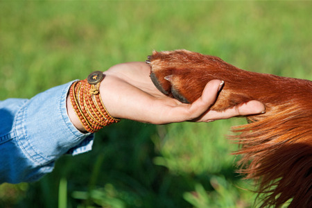 Menselijke hand die poot hond