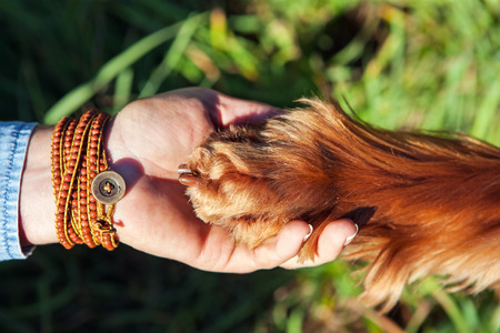 Human hand holding dogs paw Stock Photo