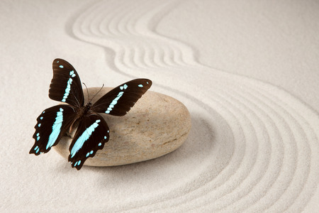 Zen butterfly Stock Photo