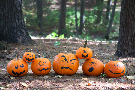 Halloween pumpkins in the woods Stock Photo