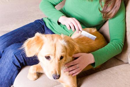 Jong meisje zittend op de bank en kammen haar hond
